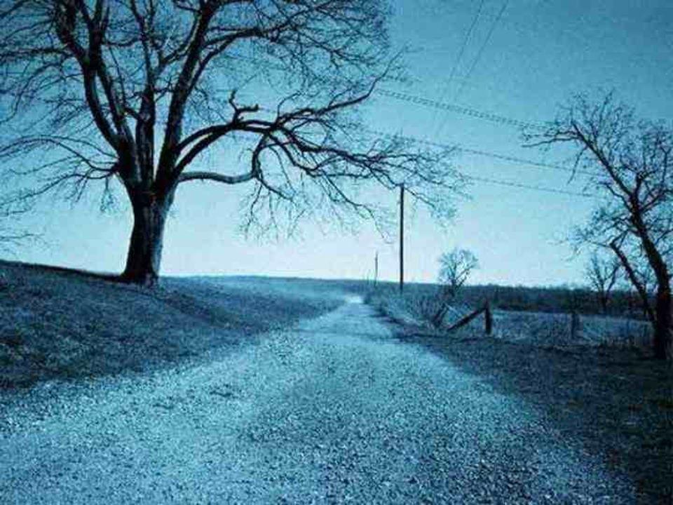 Um dia, deixaremos de ser parte do caminho...Um dia, deixaremos de ser parte do caminho...