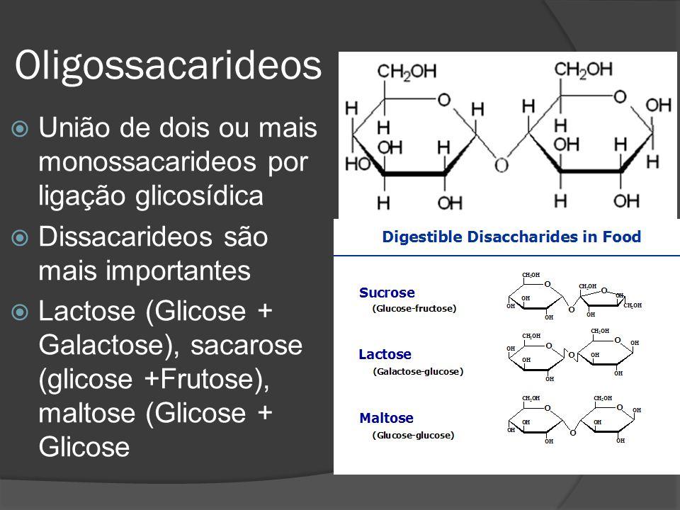 Oligossacarideos União de dois ou mais monossacarideos por ligação glicosídica Dissacarideos são mais importantes Lactose (Glicose + Galactose), sacar