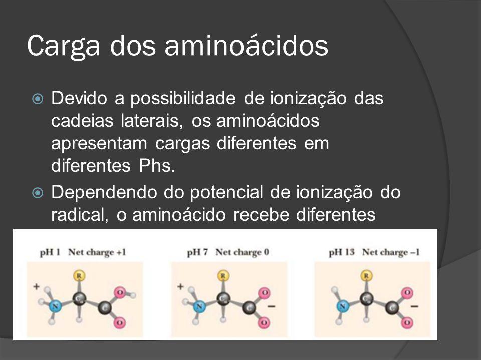 Carga dos aminoácidos Devido a possibilidade de ionização das cadeias laterais, os aminoácidos apresentam cargas diferentes em diferentes Phs. Depende