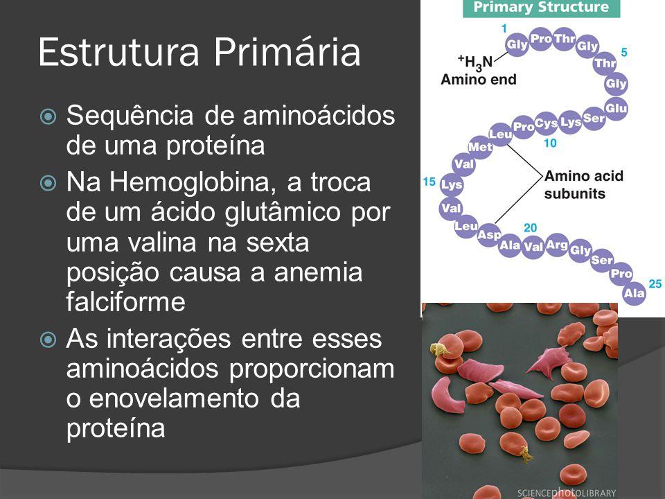 Estrutura Primária Sequência de aminoácidos de uma proteína Na Hemoglobina, a troca de um ácido glutâmico por uma valina na sexta posição causa a anem