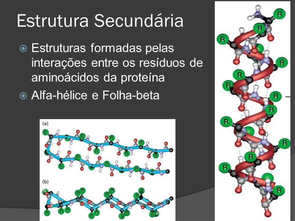Estrutura Secundária Estruturas formadas pelas interações entre os resíduos de aminoácidos da proteína Alfa-hélice e Folha-beta