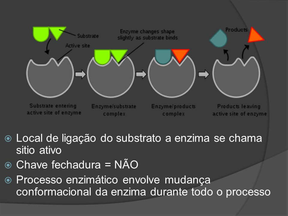 Local de ligação do substrato a enzima se chama sitio ativo Chave fechadura = NÃO Processo enzimático envolve mudança conformacional da enzima durante