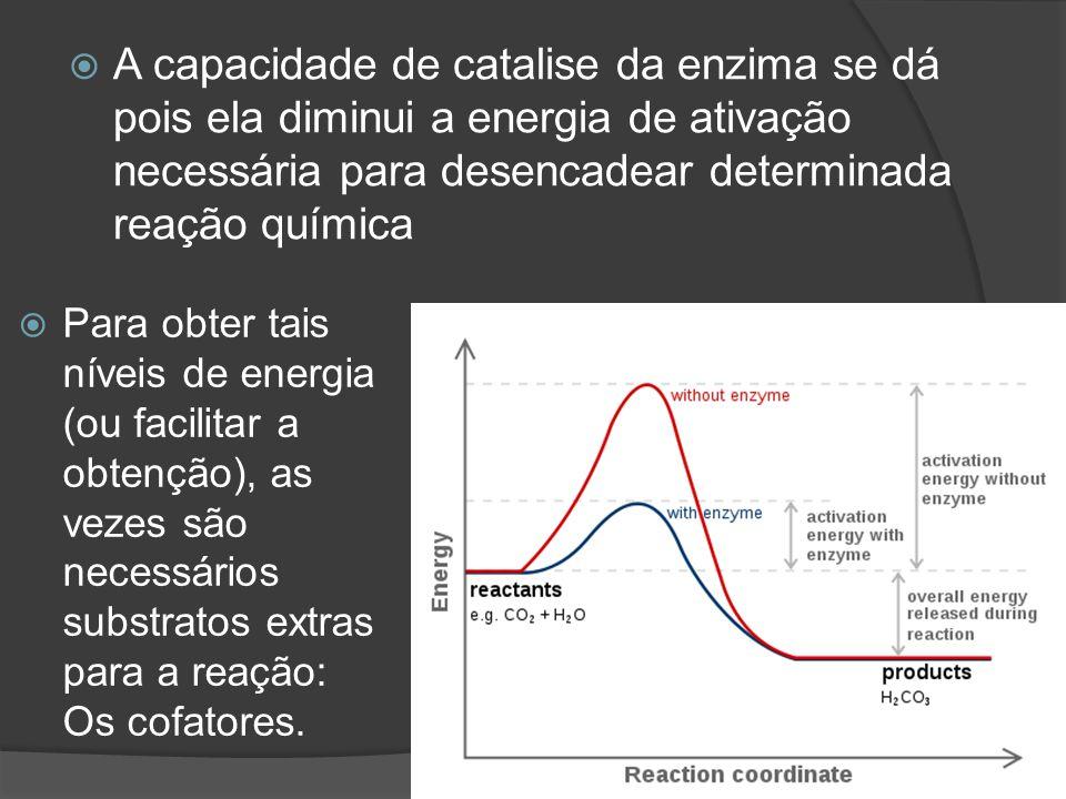 A capacidade de catalise da enzima se dá pois ela diminui a energia de ativação necessária para desencadear determinada reação química Para obter tais