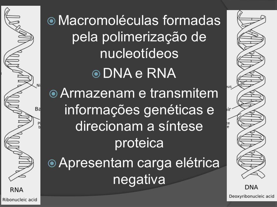 Macromoléculas formadas pela polimerização de nucleotídeos DNA e RNA Armazenam e transmitem informações genéticas e direcionam a síntese proteica Apre