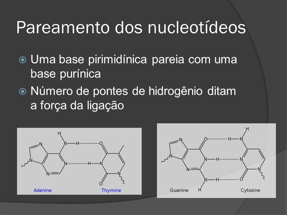 Pareamento dos nucleotídeos Uma base pirimidínica pareia com uma base purínica Número de pontes de hidrogênio ditam a força da ligação