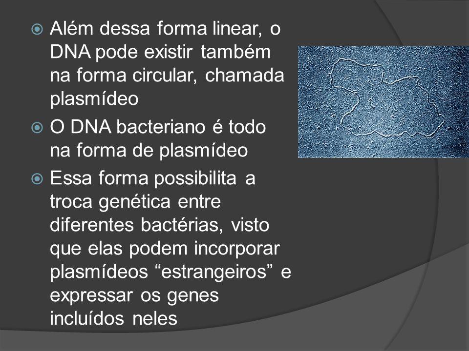 Além dessa forma linear, o DNA pode existir também na forma circular, chamada plasmídeo O DNA bacteriano é todo na forma de plasmídeo Essa forma possi