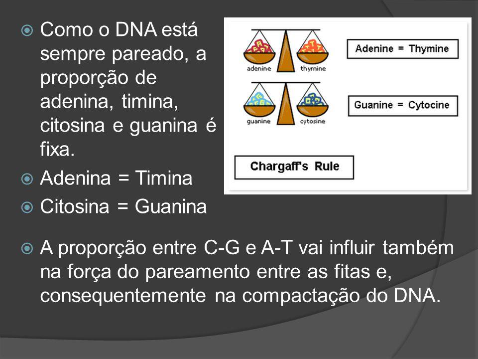 Como o DNA está sempre pareado, a proporção de adenina, timina, citosina e guanina é fixa. Adenina = Timina Citosina = Guanina A proporção entre C-G e