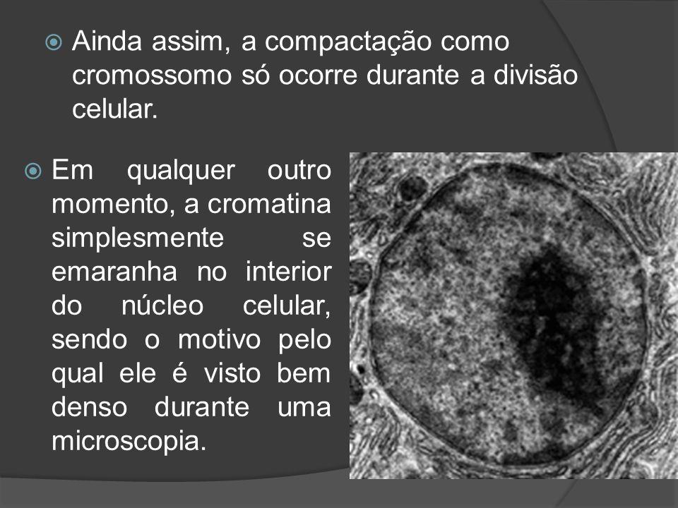 Ainda assim, a compactação como cromossomo só ocorre durante a divisão celular. Em qualquer outro momento, a cromatina simplesmente se emaranha no int