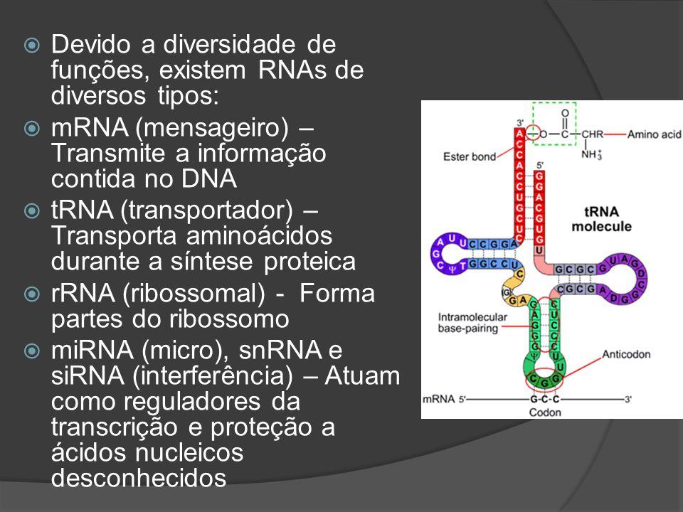 Devido a diversidade de funções, existem RNAs de diversos tipos: mRNA (mensageiro) – Transmite a informação contida no DNA tRNA (transportador) – Tran