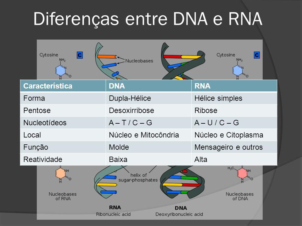 Diferenças entre DNA e RNA CaracterísticaDNARNA FormaDupla-HéliceHélice simples PentoseDesoxirriboseRibose NucleotídeosA – T / C – GA – U / C – G Loca