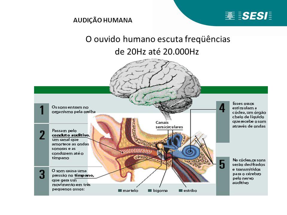 O ouvido humano escuta freqüências de 20Hz até 20.000Hz AUDIÇÃO HUMANA
