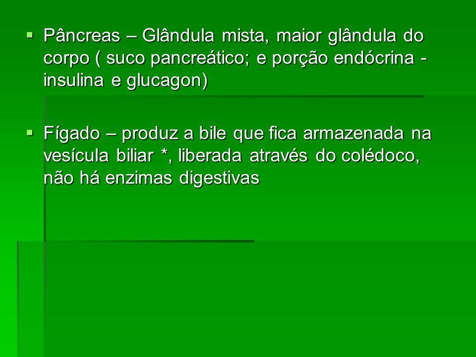 Pâncreas – Glândula mista, maior glândula do corpo ( suco pancreático; e porção endócrina - insulina e glucagon) Pâncreas – Glândula mista, maior glândula do corpo ( suco pancreático; e porção endócrina - insulina e glucagon) Fígado – produz a bile que fica armazenada na vesícula biliar *, liberada através do colédoco, não há enzimas digestivas Fígado – produz a bile que fica armazenada na vesícula biliar *, liberada através do colédoco, não há enzimas digestivas