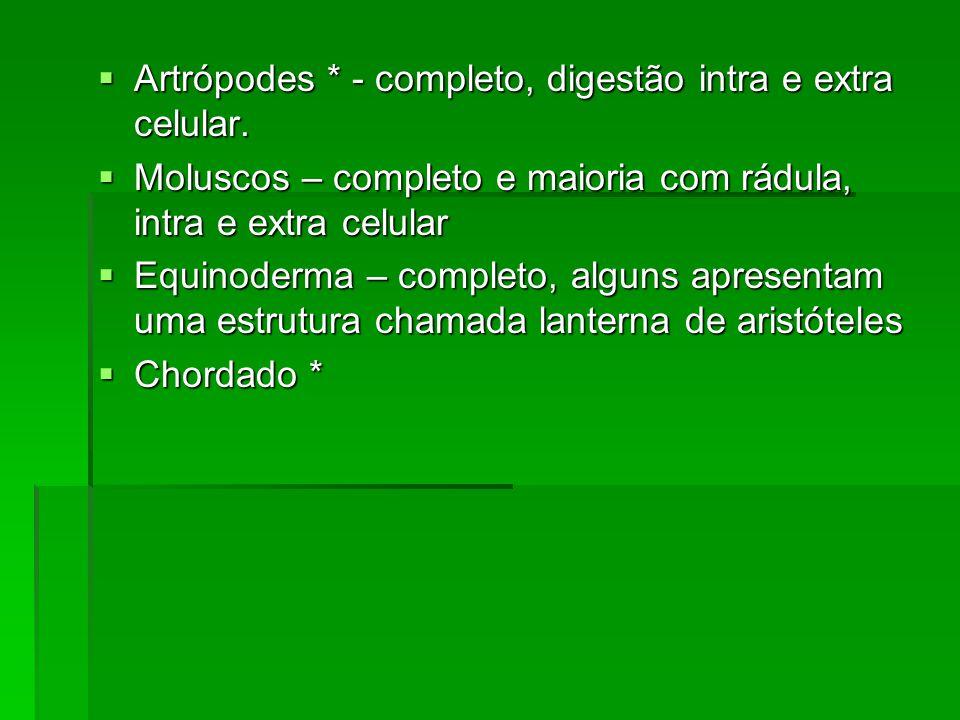 Artrópodes * - completo, digestão intra e extra celular. Artrópodes * - completo, digestão intra e extra celular. Moluscos – completo e maioria com rá