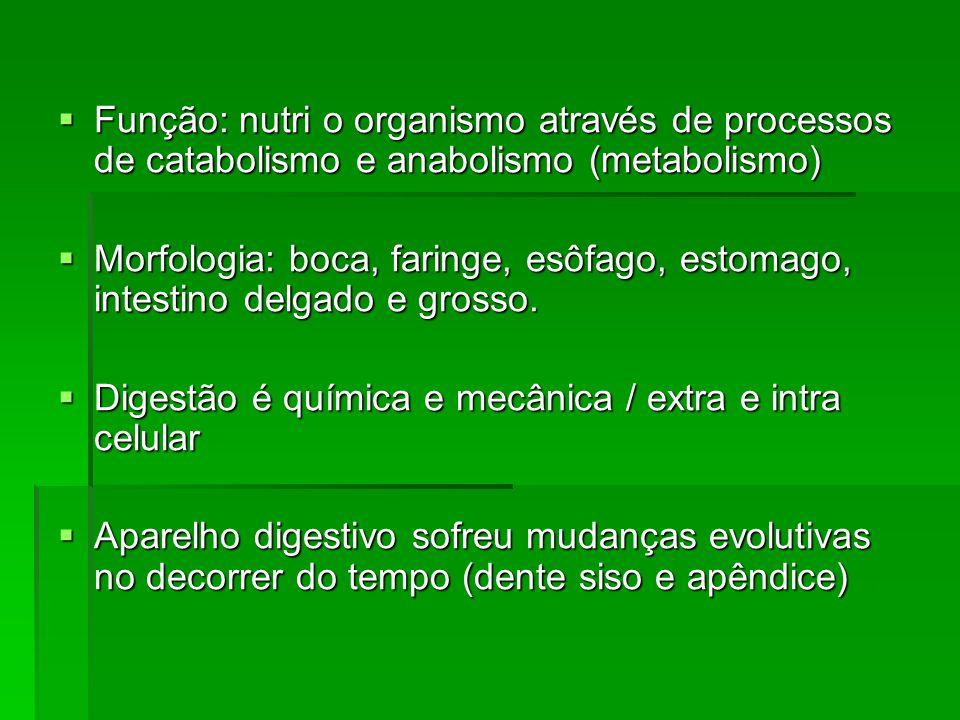 Função: nutri o organismo através de processos de catabolismo e anabolismo (metabolismo) Função: nutri o organismo através de processos de catabolismo