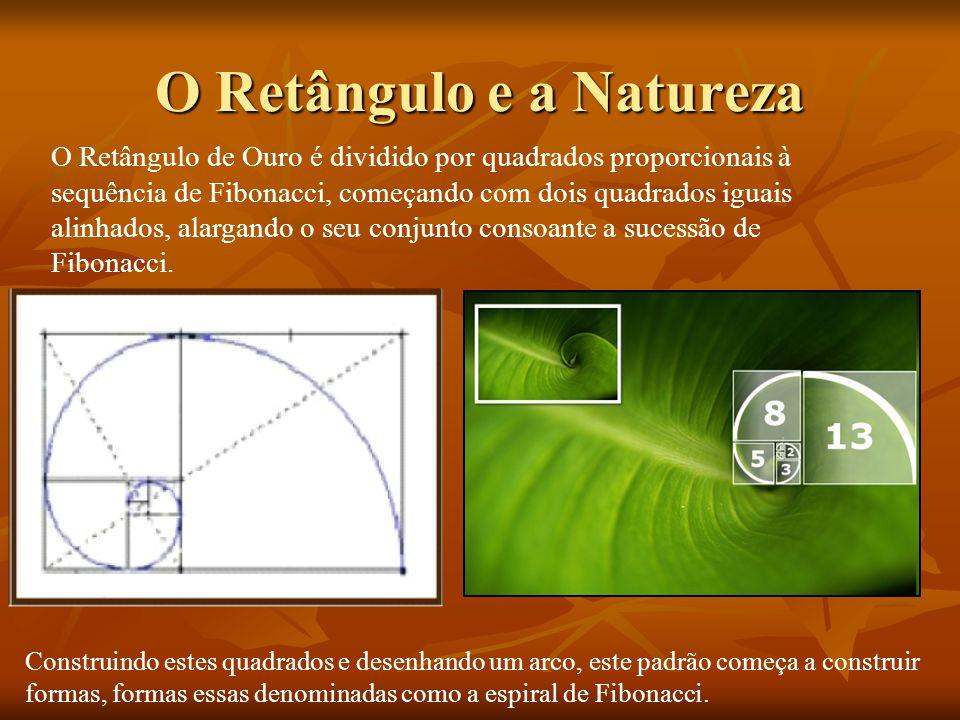 O Retângulo e a Natureza Construindo estes quadrados e desenhando um arco, este padrão começa a construir formas, formas essas denominadas como a espi