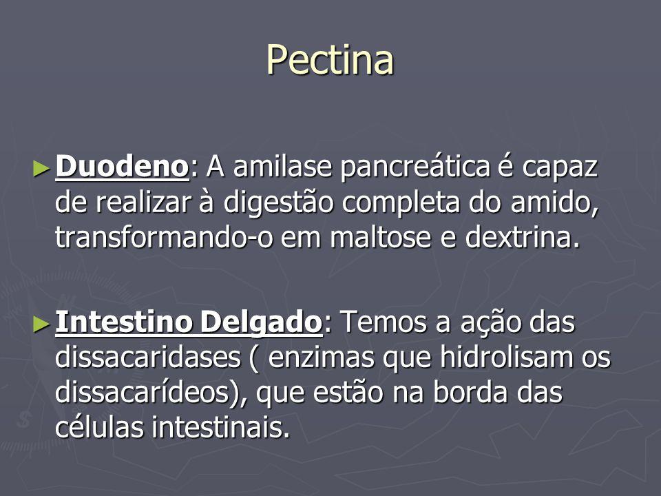 Pectina Duodeno: A amilase pancreática é capaz de realizar à digestão completa do amido, transformando-o em maltose e dextrina. Duodeno: A amilase pan