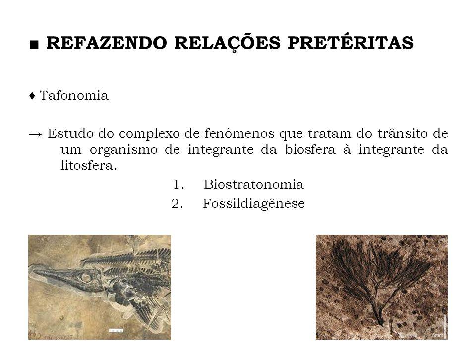 Tafonomia Estudo do complexo de fenômenos que tratam do trânsito de um organismo de integrante da biosfera à integrante da litosfera. 1.Biostratonomia