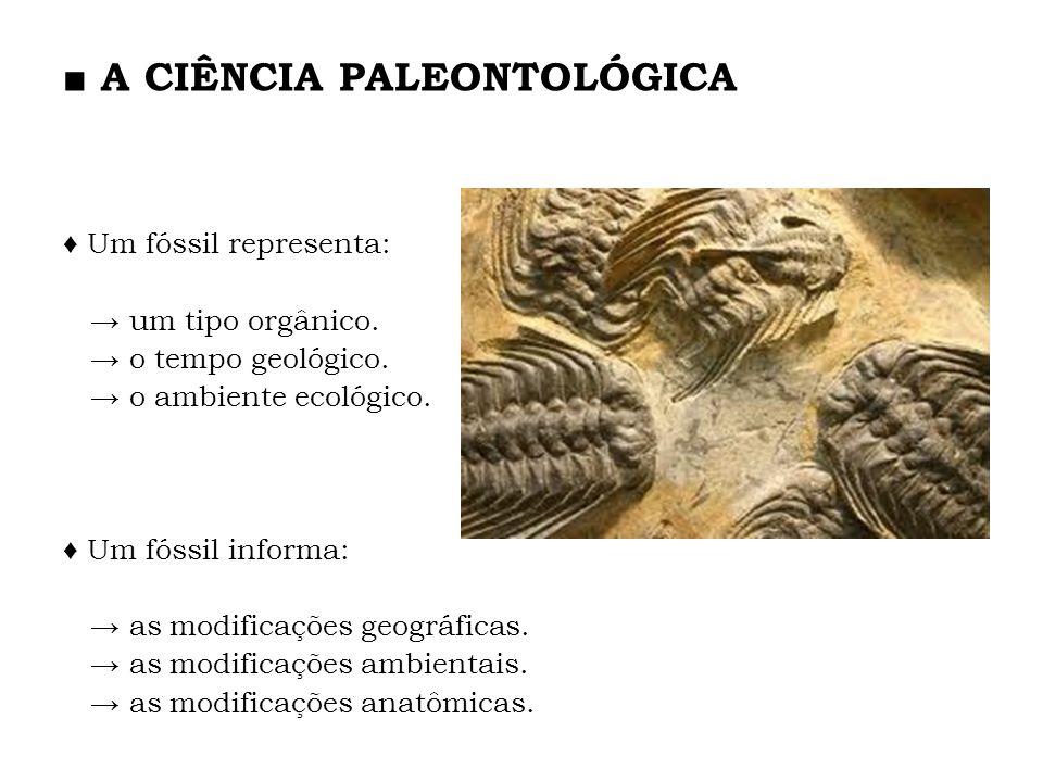 Um fóssil representa: um tipo orgânico. o tempo geológico. o ambiente ecológico. Um fóssil informa: as modificações geográficas. as modificações ambie