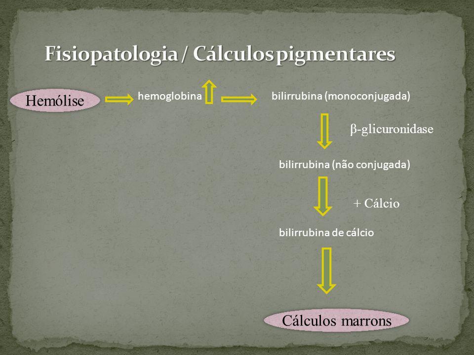 hemoglobina bilirrubina (monoconjugada) bilirrubina (não conjugada) bilirrubina de cálcio Hemólise Cálculos marrons β-glicuronidase + Cálcio