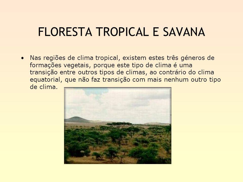 FLORESTA TROPICAL E SAVANA Nas regiões de clima tropical, existem estes três géneros de formações vegetais, porque este tipo de clima é uma transição