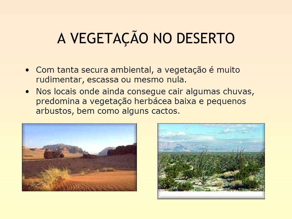 A VEGETAÇÃO NO DESERTO Com tanta secura ambiental, a vegetação é muito rudimentar, escassa ou mesmo nula. Nos locais onde ainda consegue cair algumas