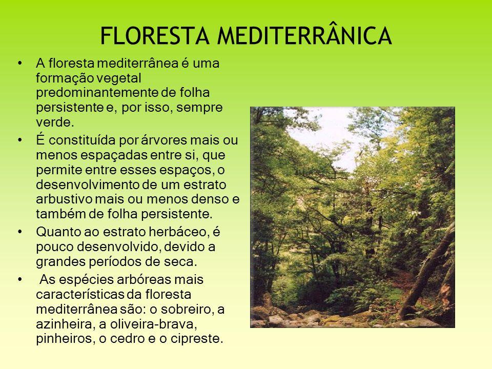 FLORESTA MEDITERRÂNICA A floresta mediterrânea é uma formação vegetal predominantemente de folha persistente e, por isso, sempre verde. É constituída