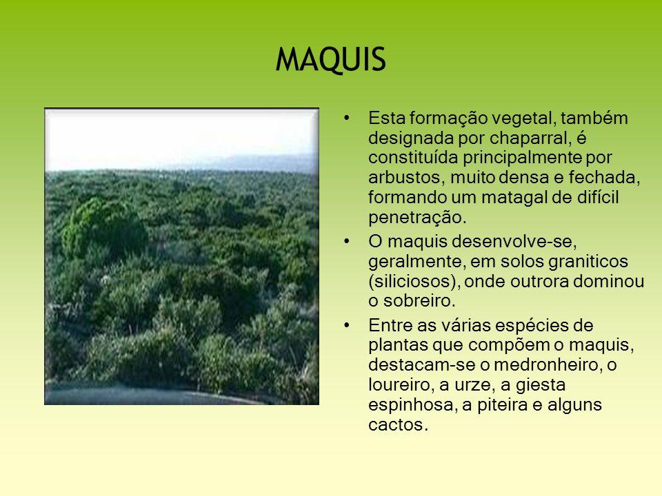 MAQUIS Esta formação vegetal, também designada por chaparral, é constituída principalmente por arbustos, muito densa e fechada, formando um matagal de