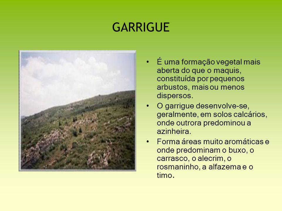 GARRIGUE É uma formação vegetal mais aberta do que o maquis, constituída por pequenos arbustos, mais ou menos dispersos. O garrigue desenvolve-se, ger
