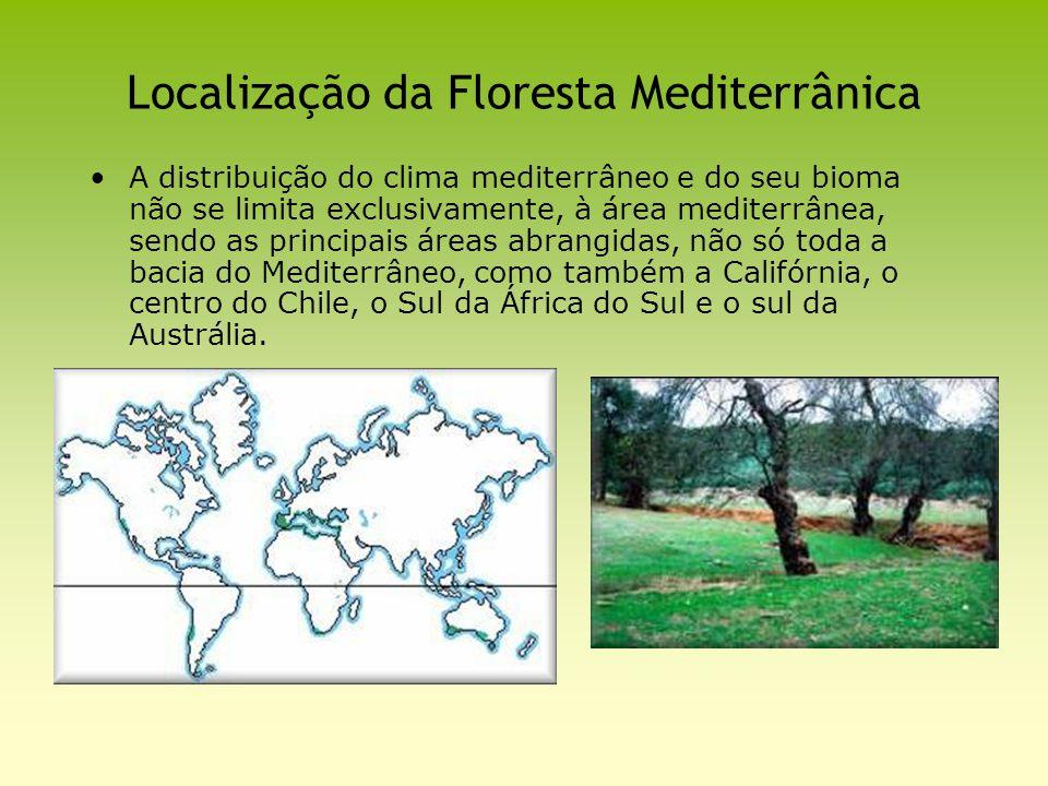 Localização da Floresta Mediterrânica A distribuição do clima mediterrâneo e do seu bioma não se limita exclusivamente, à área mediterrânea, sendo as