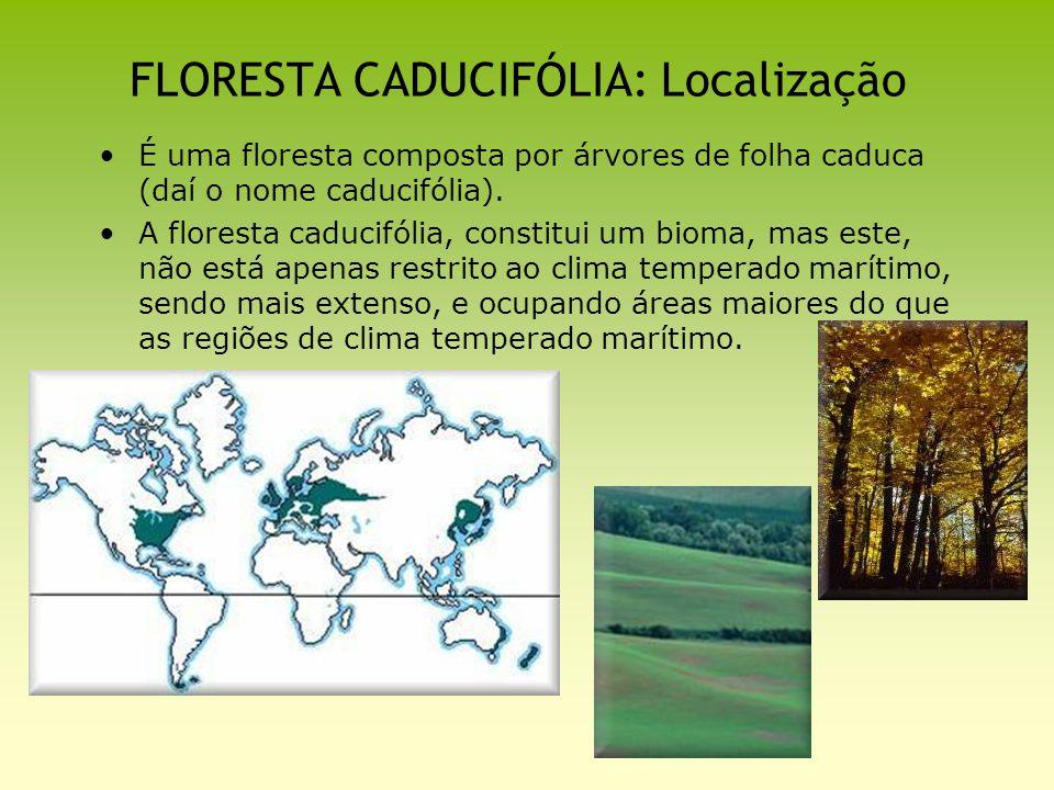 FLORESTA CADUCIFÓLIA: Localização É uma floresta composta por árvores de folha caduca (daí o nome caducifólia). A floresta caducifólia, constitui um b
