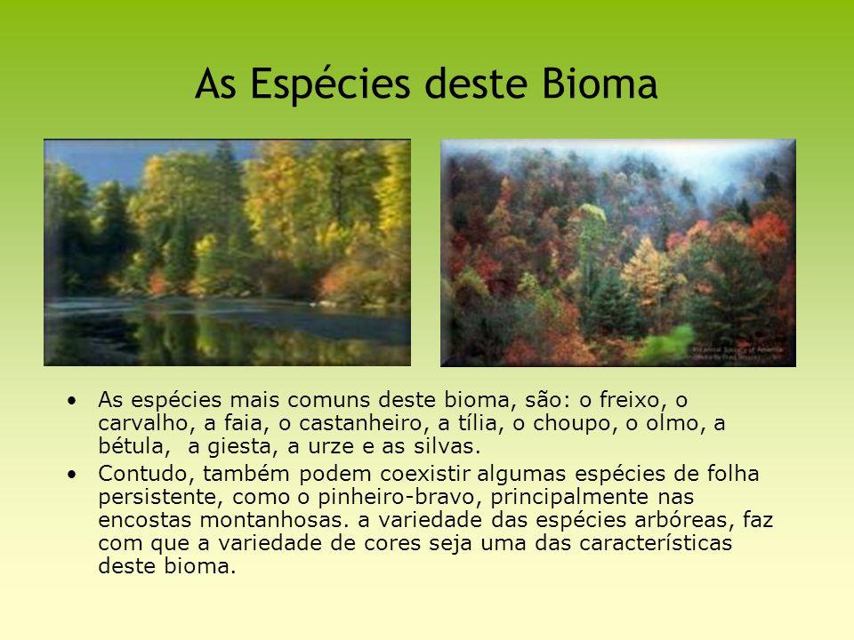 As Espécies deste Bioma As espécies mais comuns deste bioma, são: o freixo, o carvalho, a faia, o castanheiro, a tília, o choupo, o olmo, a bétula, a