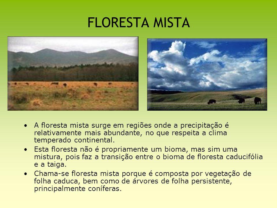 FLORESTA MISTA A floresta mista surge em regiões onde a precipitação é relativamente mais abundante, no que respeita a clima temperado continental. Es