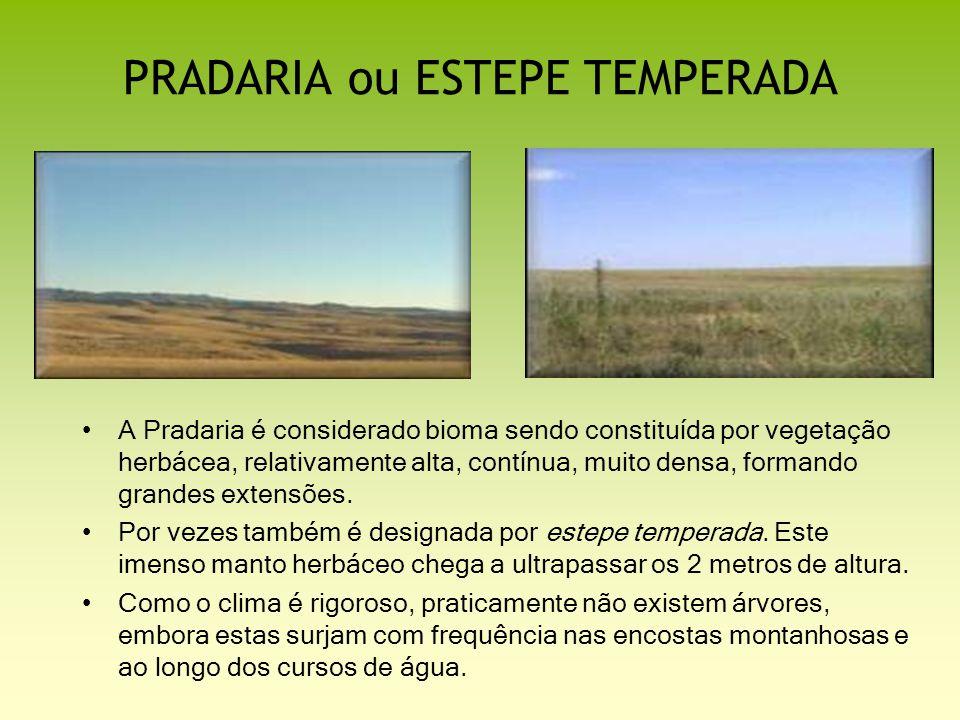 PRADARIA ou ESTEPE TEMPERADA A Pradaria é considerado bioma sendo constituída por vegetação herbácea, relativamente alta, contínua, muito densa, forma