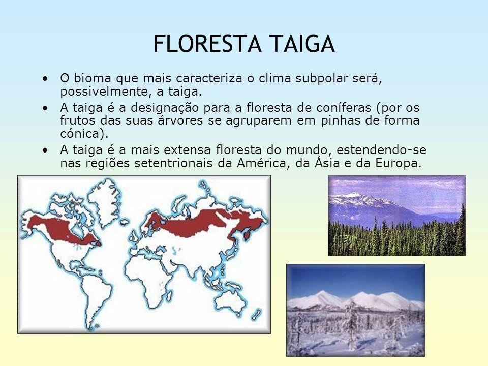 FLORESTA TAIGA O bioma que mais caracteriza o clima subpolar será, possivelmente, a taiga. A taiga é a designação para a floresta de coníferas (por os