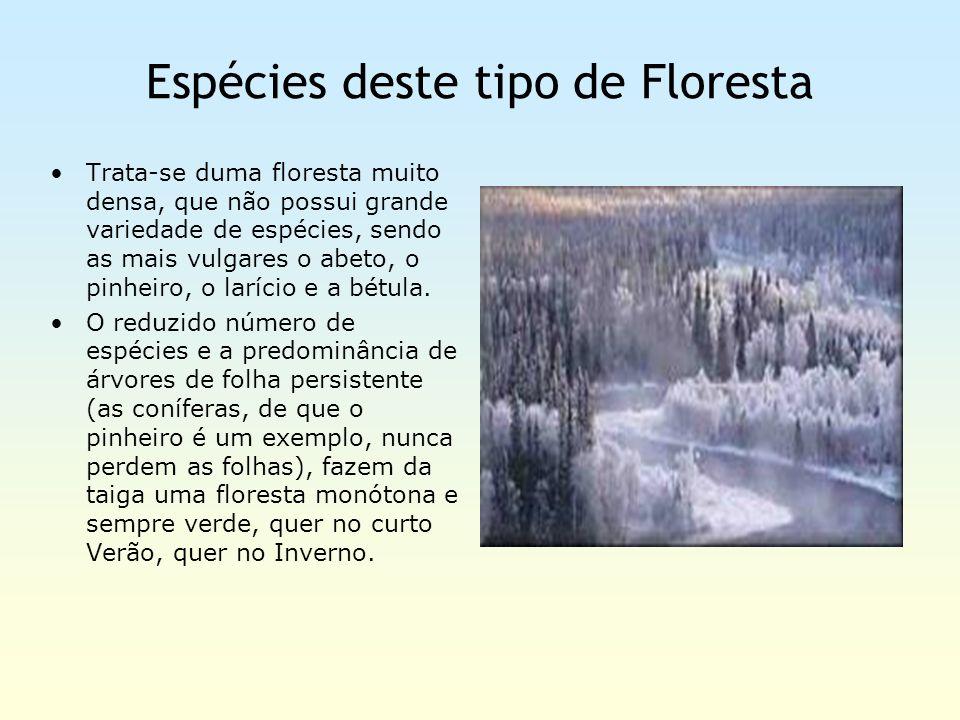 Espécies deste tipo de Floresta Trata-se duma floresta muito densa, que não possui grande variedade de espécies, sendo as mais vulgares o abeto, o pin