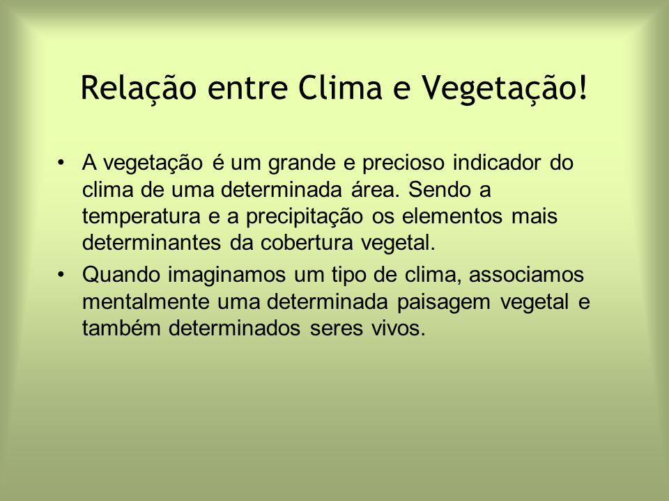 Relação entre Clima e Vegetação! A vegetação é um grande e precioso indicador do clima de uma determinada área. Sendo a temperatura e a precipitação o