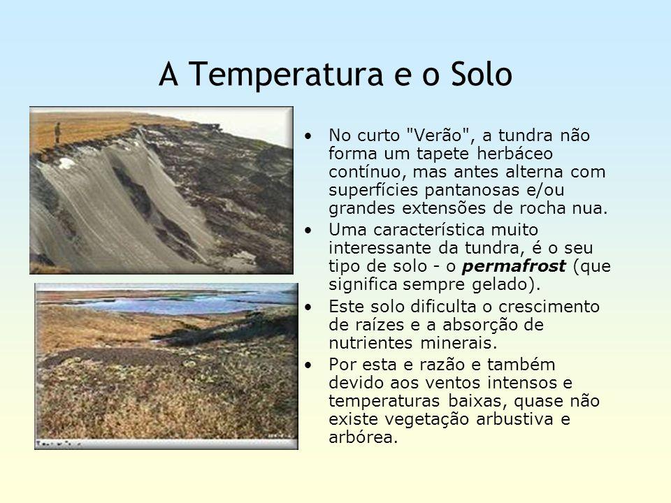 A Temperatura e o Solo No curto