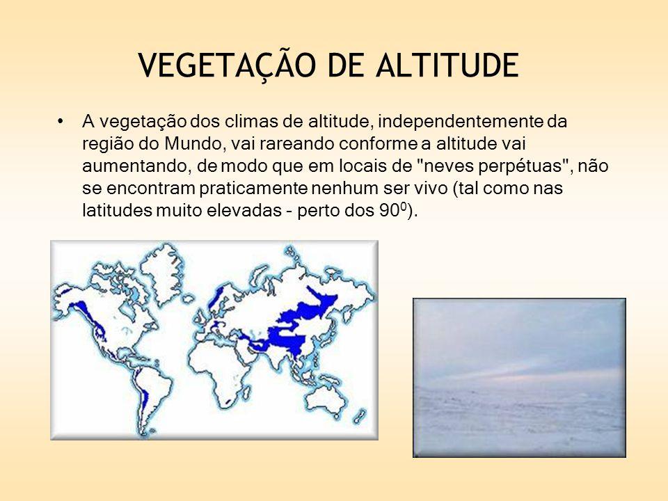 VEGETAÇÃO DE ALTITUDE A vegetação dos climas de altitude, independentemente da região do Mundo, vai rareando conforme a altitude vai aumentando, de mo