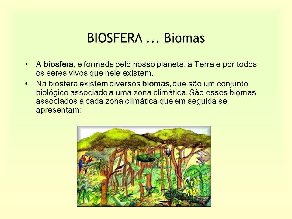 BIOSFERA... Biomas A biosfera, é formada pelo nosso planeta, a Terra e por todos os seres vivos que nele existem. Na biosfera existem diversos biomas,