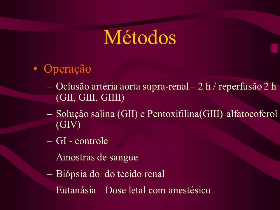 Métodos Operação –Oclusão artéria aorta supra-renal – 2 h / reperfusão 2 h (GII, GIII, GIIII) –Solução salina (GII) e Pentoxifilina(GIII) alfatocofero