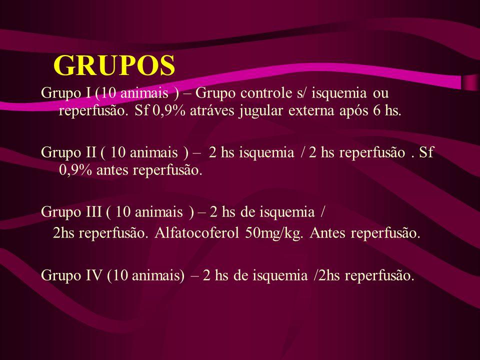 Grupo I (10 animais ) – Grupo controle s/ isquemia ou reperfusão. Sf 0,9% atráves jugular externa após 6 hs. Grupo II ( 10 animais ) – 2 hs isquemia /