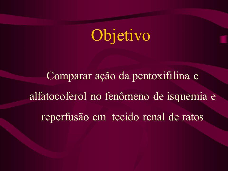Objetivo Comparar ação da pentoxifilina e alfatocoferol no fenômeno de isquemia e reperfusão em tecido renal de ratos