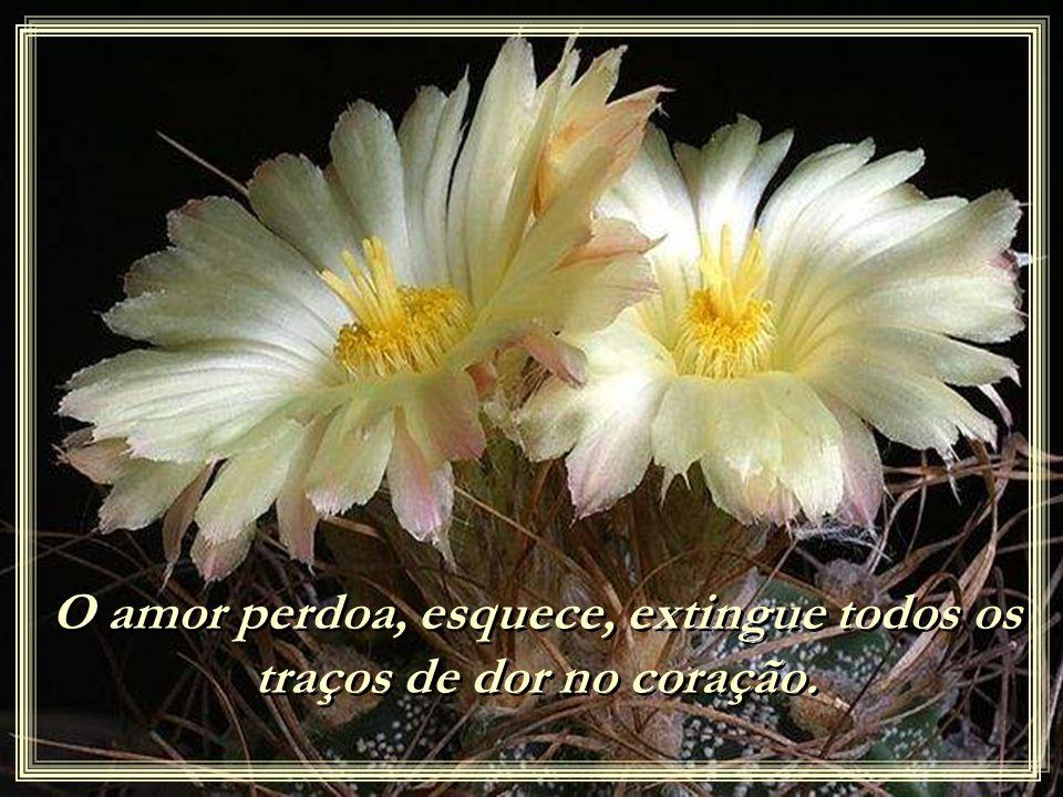 O amor não alimenta mágoas com pensamentos dolorosos, não cultiva ofensas com lástimas e autocomiseração. O amor não alimenta mágoas com pensamentos d