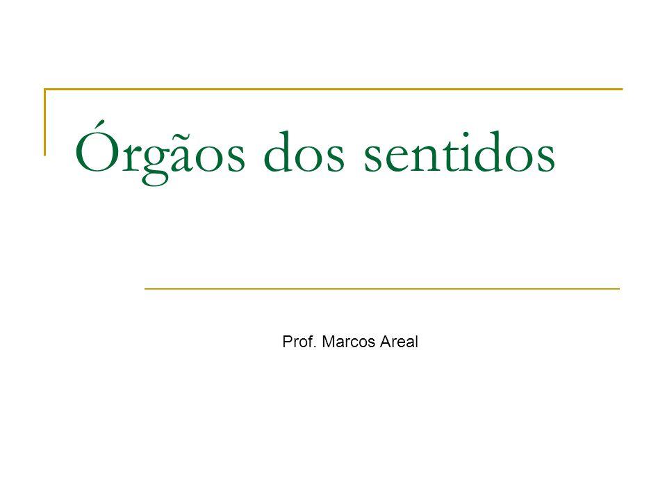 Órgãos dos sentidos Prof. Marcos Areal