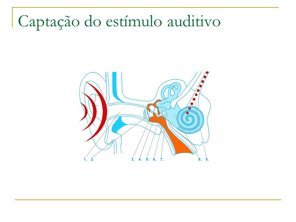 Captação do estímulo auditivo