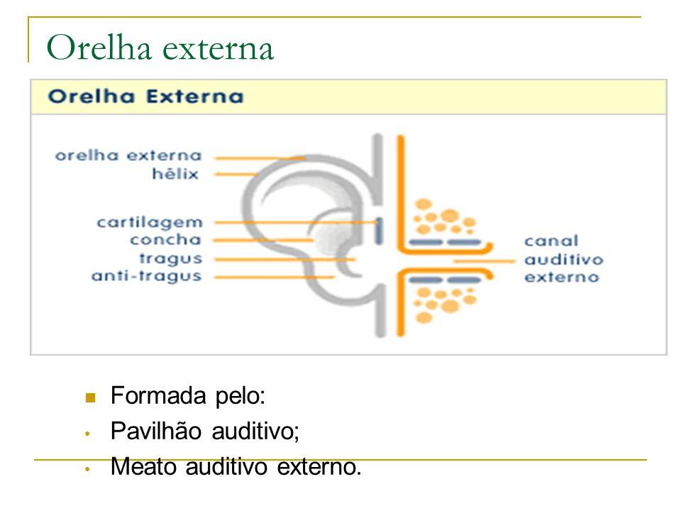Orelha externa Formada pelo: Pavilhão auditivo; Meato auditivo externo.