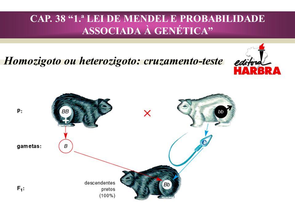CAP. 38 1.ª LEI DE MENDEL E PROBABILIDADE ASSOCIADA À GENÉTICA Homozigoto ou heterozigoto: cruzamento-teste