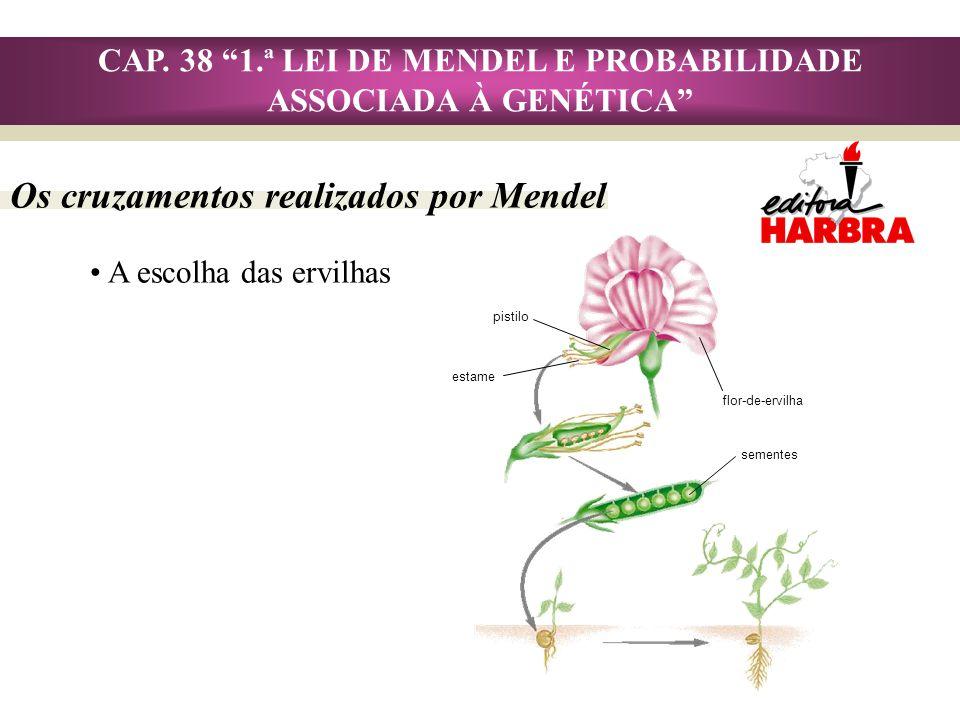 Os cruzamentos realizados por Mendel CAP. 38 1.ª LEI DE MENDEL E PROBABILIDADE ASSOCIADA À GENÉTICA A escolha das ervilhas pistilo estame flor-de-ervi