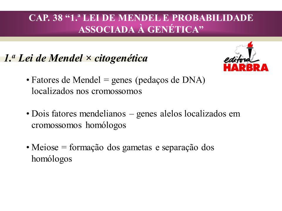 CAP. 38 1.ª LEI DE MENDEL E PROBABILIDADE ASSOCIADA À GENÉTICA 1. a Lei de Mendel × citogenética Fatores de Mendel = genes (pedaços de DNA) localizado