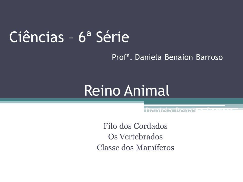 Ciências – 6ª Série Profª. Daniela Benaion Barroso Filo dos Cordados Os Vertebrados Classe dos Mamíferos Reino Animal Profª. Daniela Benaion Barroso